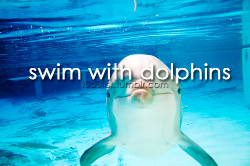 beautiful, dolphin, dolphins, fashion, film, movie, quote, rain, swim, text, to do list, todolist, typography, water, with