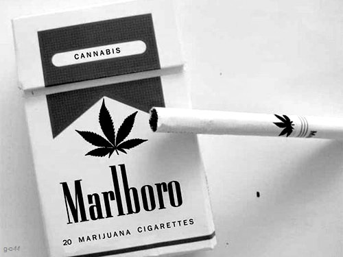 black and white, cannabis, cigarettes, marijuana, marlboro, weed