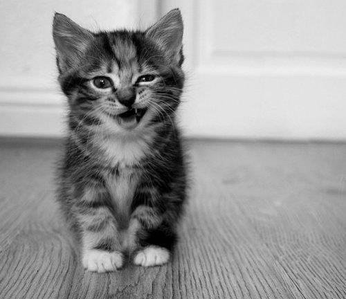 black and white, cat, cats, cute, meow