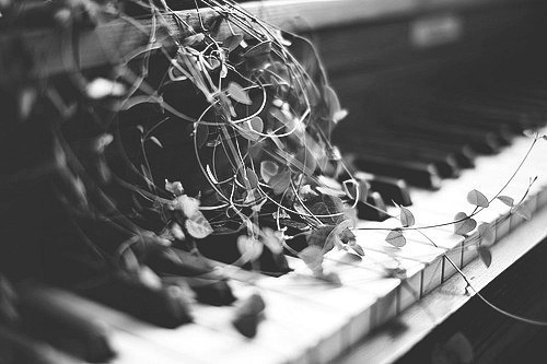 black and white, grey, keys, leaves, photography, piano, swirls