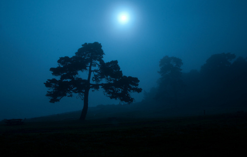 blue, dark, forest, grass, landscape, moon, moonlight, night, photography, tree, trees, view, wood