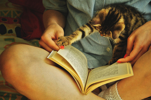 book, cat, cute, girl, kitten, paw, reading