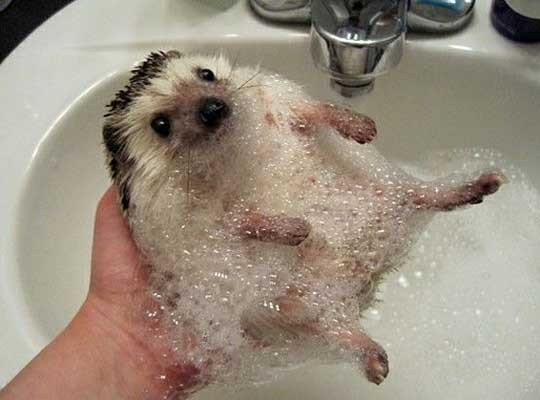 bubbles, cute, hedgehog