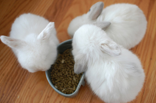 bunnies, cute, rabbit, rabbits