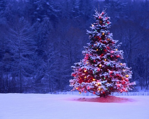 christmas, christmas tree, colorful, decorations, lights, snow, tree, winter
