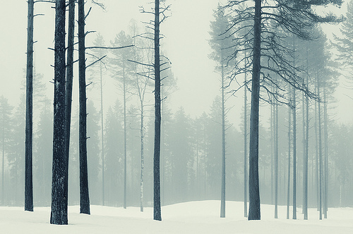 cold, icy, photography, snow, trees