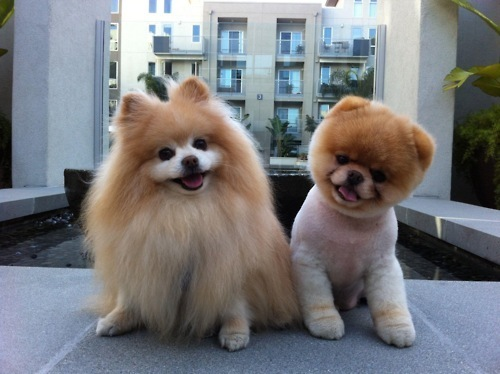 cute, dog, dogs, funny, lovely