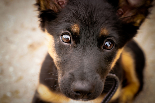 cute, dog, eyes