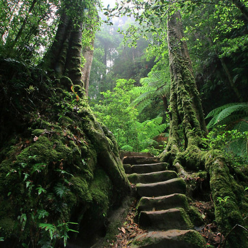 forest, green, greenery, nature, stairs