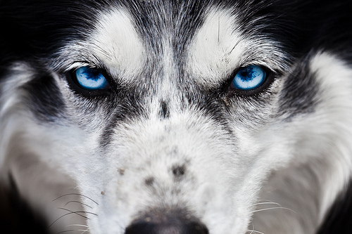 inspiring, photography, wolf, wolves