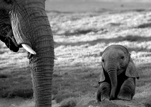 adorable, africa, animal, animals, baby