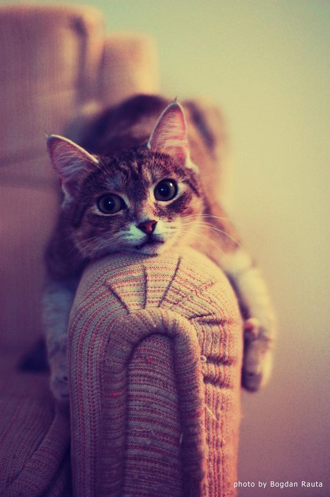 adorable, beautiful, cat, cute, ginger, kitten, photography