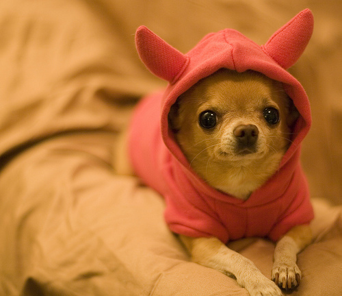 adorable, cute, dog, fashion, love, pink, puppy, style, tiny