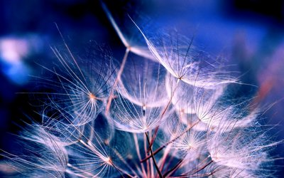 amazing, beautiful, cute, dandelion, flower, incredible, light, lion, nature, night, photo, photography, pretty