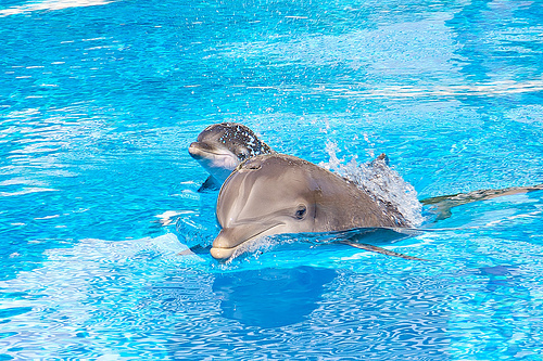 animal, animals, beautiful, cute, dolphin