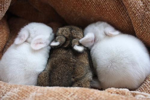 animal, babies, bunnies, cute, rabbit