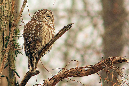 animal, cute, nature and owl