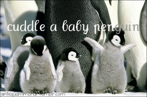 antequam, baby, before, cuddle, cute, die, moriar, penguin