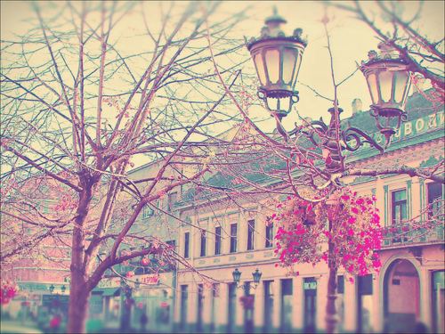 arbol, architecture, beautiful, blossoms, buildings
