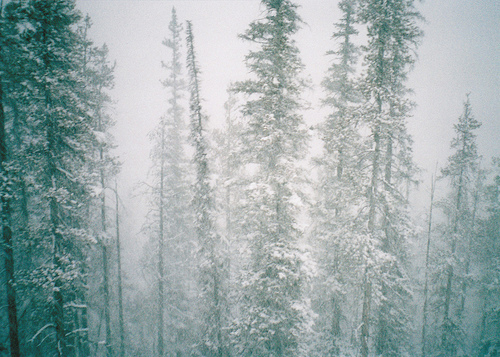 art, beautiful, cold, cool, forest, hipster, indie, photo, photography, snow, trees, winter, woods