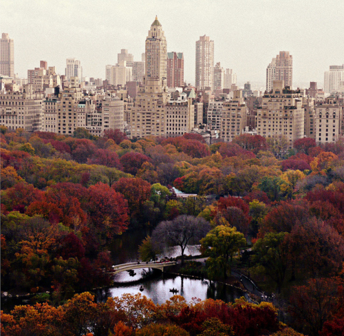 autumn, beaut, beutiful, buildings, central park, cold, cute, nature, new york, new york city, people, photography, pretty, red, tree, trees
