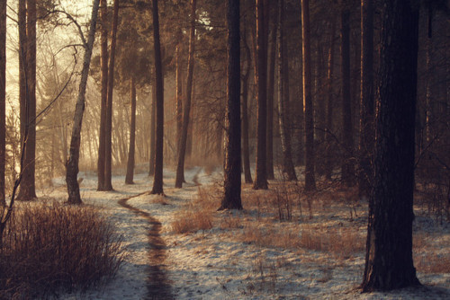 autumn, cold, forest, inspiration, light