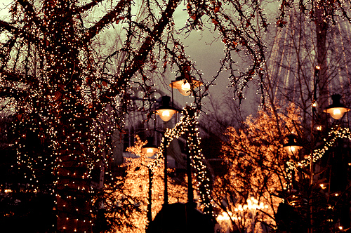 awesome, beautiful, christmas, cute, dark, flower, inspiring, japan, landscape, light, lights, magical, night, place, tree, trees