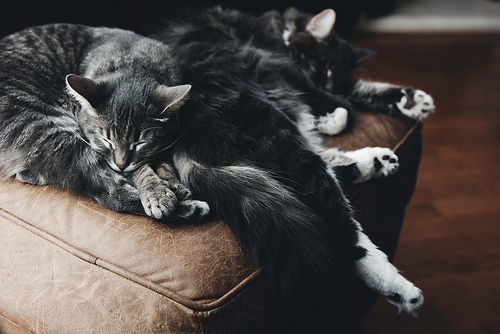 aww, cats, cute, kitten, photography, sleep