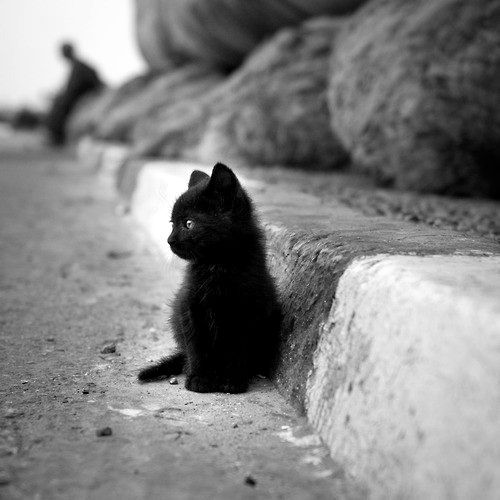 b&w, black, black and white, cat, kitten