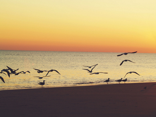 beach, bird, birds, hipster, indie