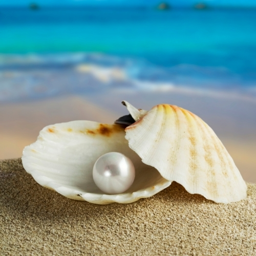beach, blue, clam, ocean, pearl