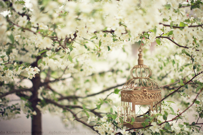 beautful, branches, cage, cherry blossoms, cute, flowers, gold, green, leaves, photography, pretty, silver, tree, vintage, white