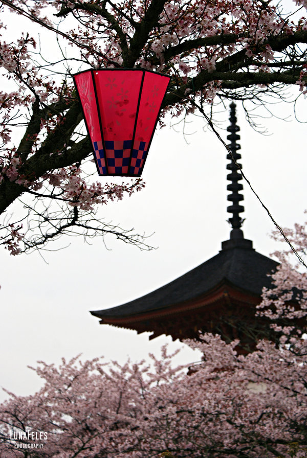 beautiful, cherry blossom, japan, miyajima, pagoda, sky, temple, tree