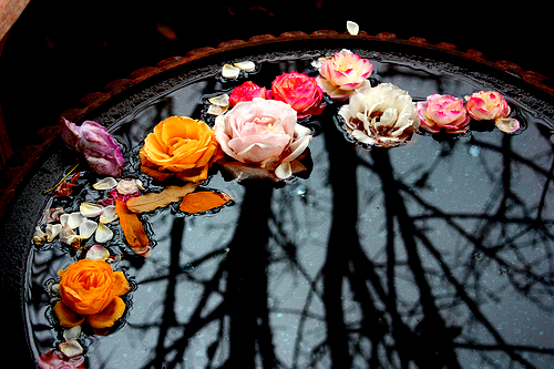 beautiful, colorful, colors, decor, decoration, flower, flowers, rose, roses, water