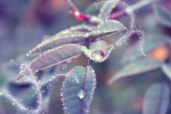 beautiful, dew, droplet, dust, enchanting