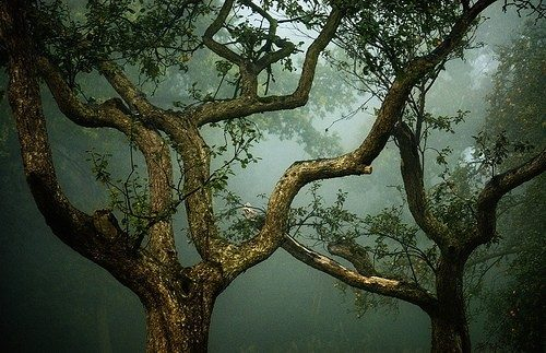 beautiful, fog, forest, green, nature