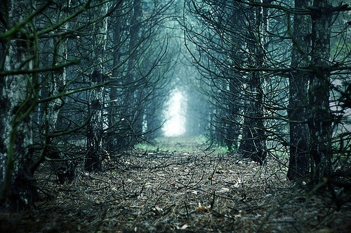2d5a5a, beauty, dark, light, nature, path, photography, trees, wood