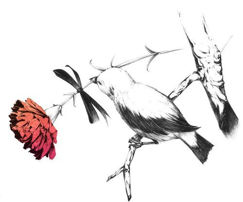 bird, branch, flower, illustration, red