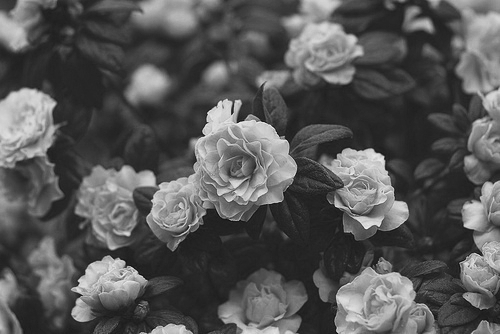 Black And White Vintage Flowers 76