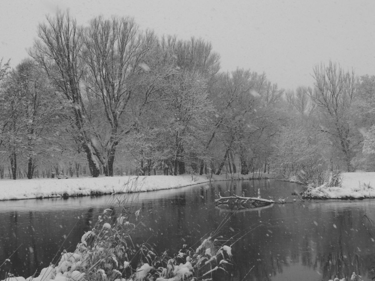 black and white, landscape, snow, tree, trees