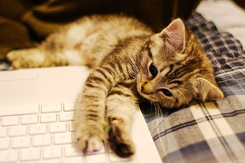 cat, computer, cute, laptop, notebook, photography, sweet