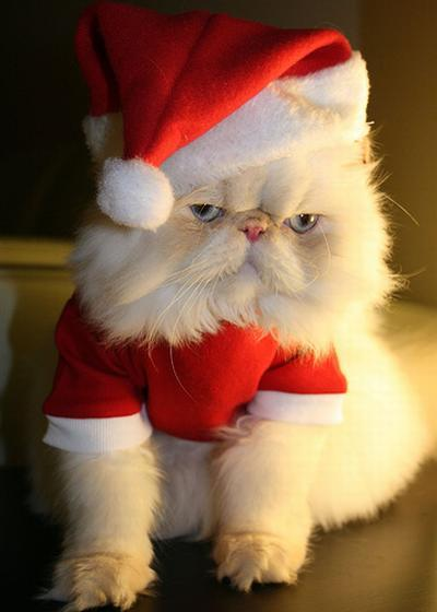 cat, cute, funny, new year, santa