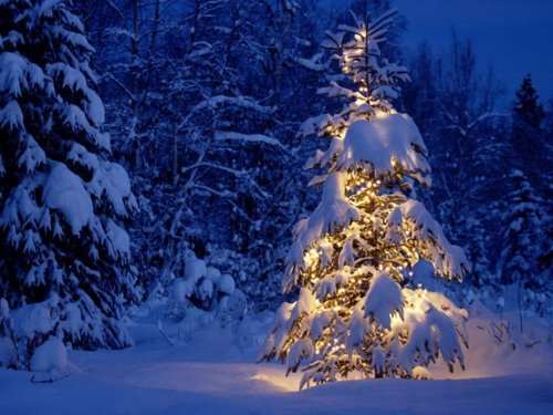 christmas, lights, pretty, snow, tree