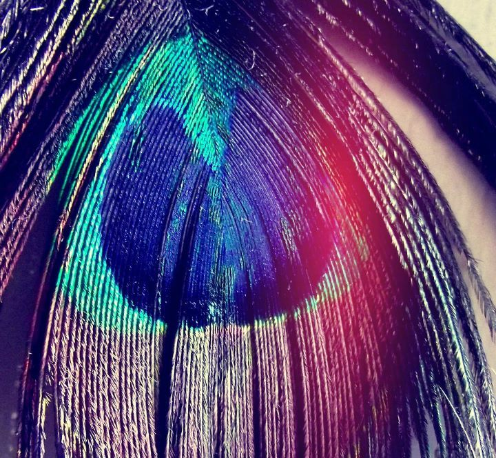 colors, cute, feather, peacock feather