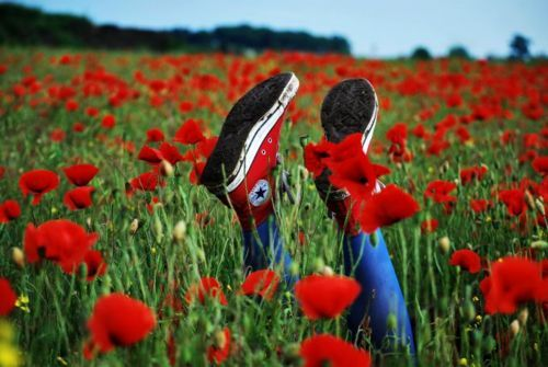 converse, fashion, flower, photography, red, shoes