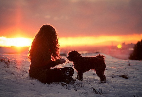 cute, dog, evening, girl, style, sun, sunlight, sunset, sunshine, winter