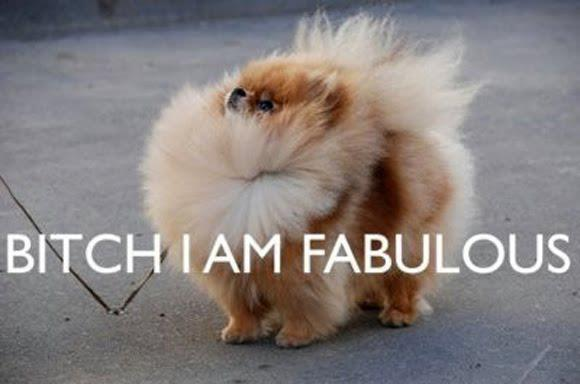 cute  dog  fluffy  funnyFunny Cute Dog Pictures