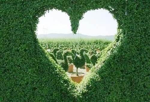 cute, figure, green, heart, love, love you, nature, plants, sky, summer, swan