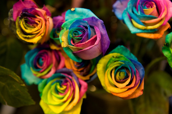 cute, flower, pretty, rainbow, rose, roses