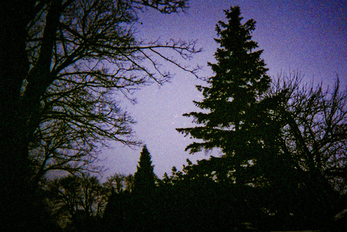 dark, forest, indie, long shutter, night, night sky, stars, vintage